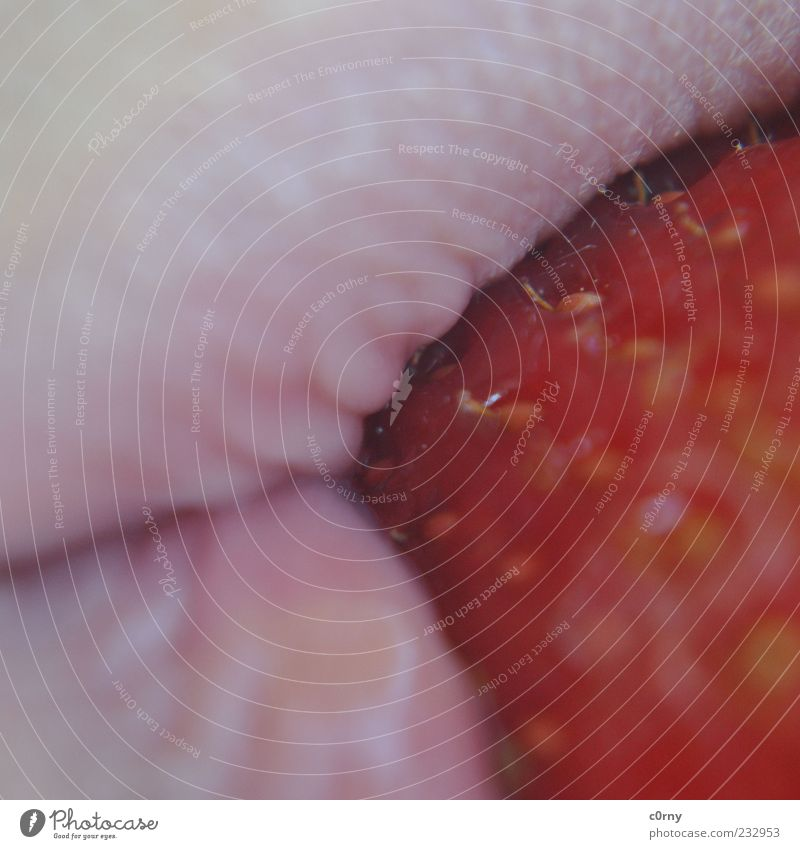 your strawberry mouth Food Fruit Strawberry Mouth Lips To enjoy Delicious Colour photo Exterior shot Detail Day Macro (Extreme close-up) Close-up Nutrition