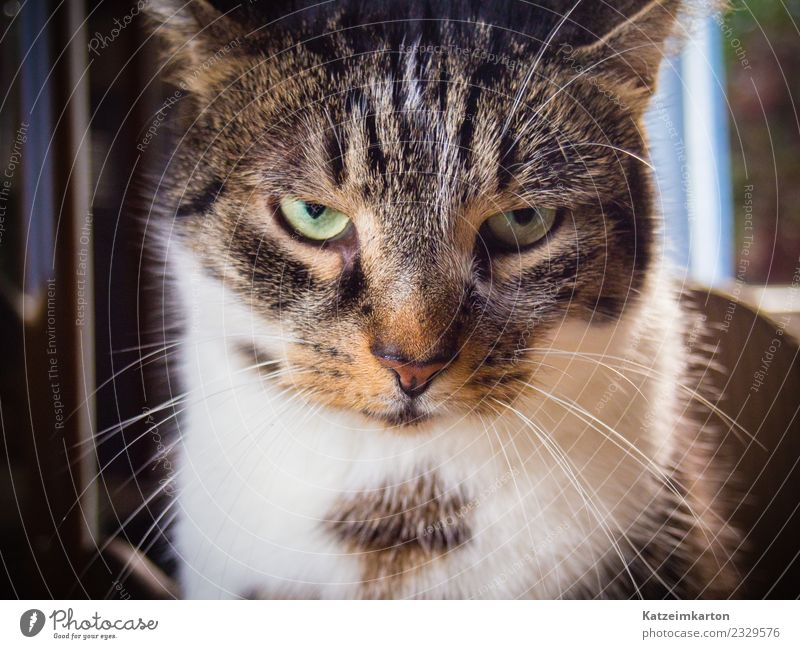Who dares bother? Animal Pet Cat Animal face Pelt 1 Observe Think Looking Aggression Exceptional Threat Brash Cold Cuddly Cute Moody Self-confident Cool (slang)