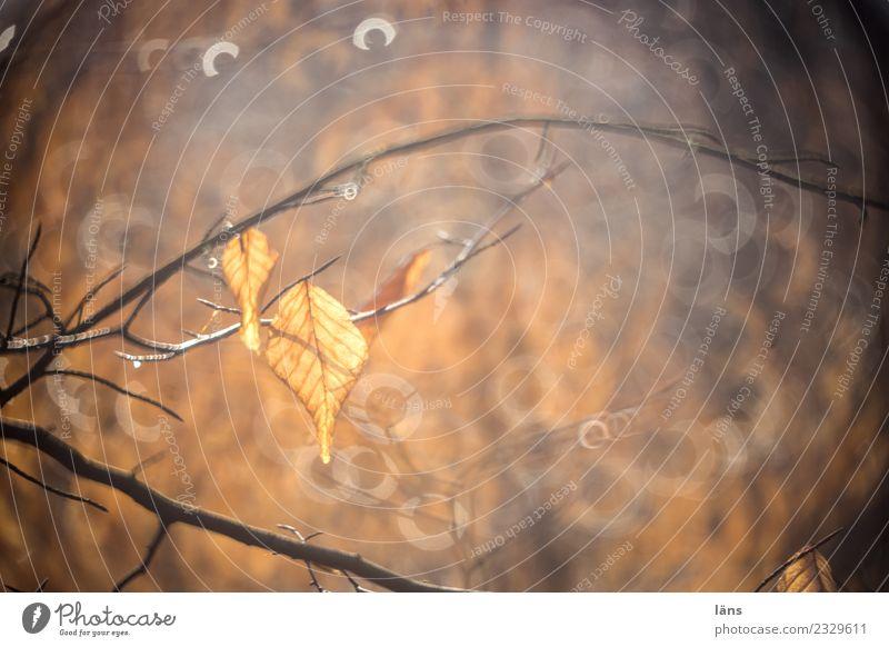 Backlit leaves Nature Leaf Back-light Forest Brown Sun Sunbeam
