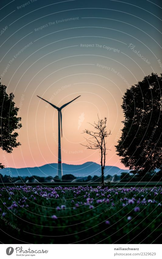windmill Energy industry Wind energy plant Environment Nature Landscape Plant Air Sky Horizon Sunrise Sunset Summer Tree Flower Poppy Poppy field Meadow Field