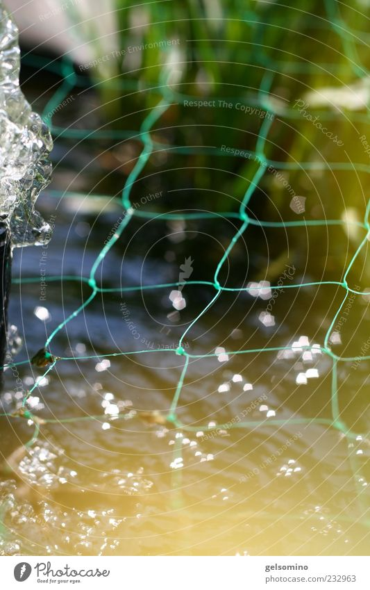 fishing net Pond Water Spring Beautiful weather Pump Blue Green Colour photo Exterior shot Morning Sunlight Water reflection Reflection Fence Loop Common Reed