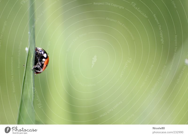 Nature Green Red Animal Environment Meadow Grass Small Wild animal Blade of grass Beetle Go up Crawl Ladybird Hold