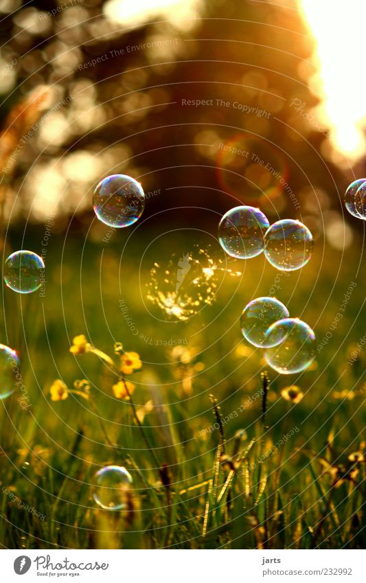 Nature Summer Meadow Spring Dream Flying Multiple Beautiful weather Snapshot Hover Ease Soap bubble Bursting Snap Reflection
