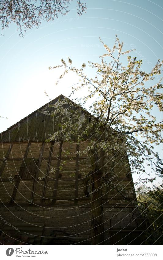 Old Tree House (Residential Structure) Calm Wall (building) Garden Blossom Stone Wall (barrier) Building Manmade structures Beautiful weather Blossoming Farm
