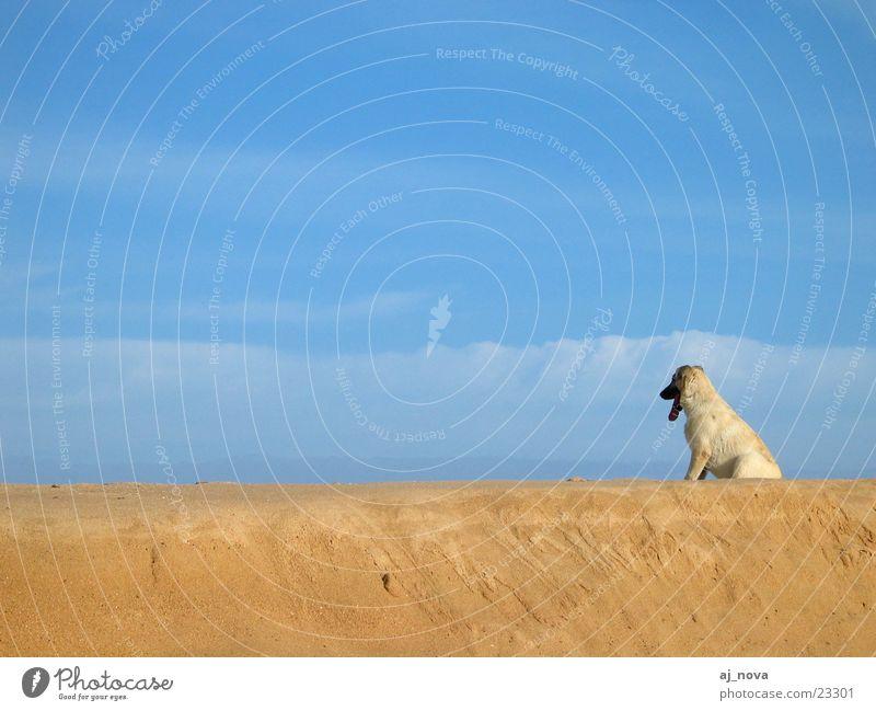 Sky Beach Dog Landscape format