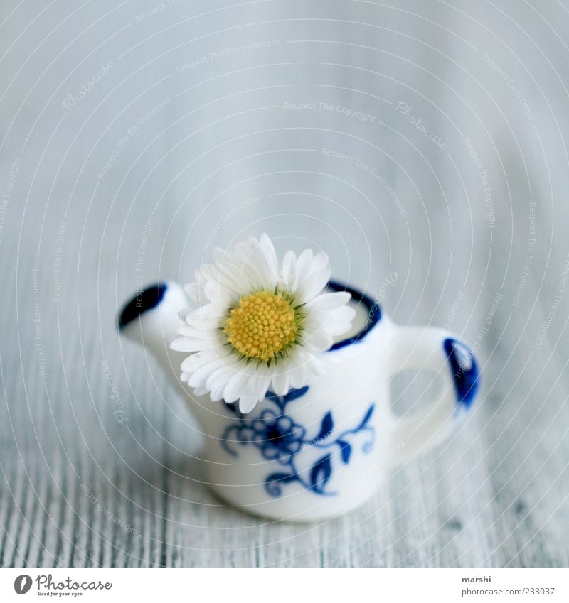 a mini greeting Plant Flower Small Blue Yellow White Daisy Jug Wooden board Sweet Watering can Decoration Vase Colour photo Interior shot Miniature Cute
