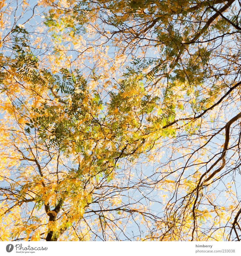 autumn networks Environment Nature Summer Autumn Climate Beautiful weather Plant Tree Multicoloured Yellow Treetop Leaf Background picture Sky Seasons