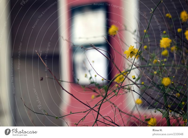 Red Plant Yellow Blossom Spring Building Car Window Facade Bushes Blossoming Twigs and branches