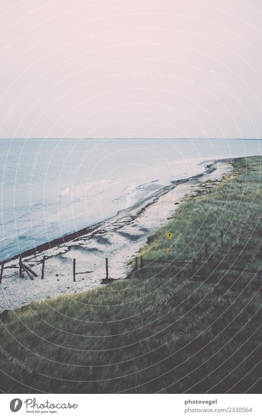 In the distance Environment Nature Landscape Animal Earth Sand Air Water Sky Cloudless sky Horizon Plant Grass Bushes Meadow Waves Coast Beach Baltic Sea Fresh