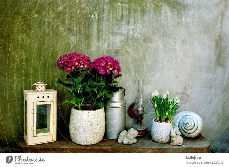 girl's photo Lifestyle Elegant Style Design Living or residing Flat (apartment) Plant Flower Blossoming Decoration Angel Lantern Hibiscus Pot plant