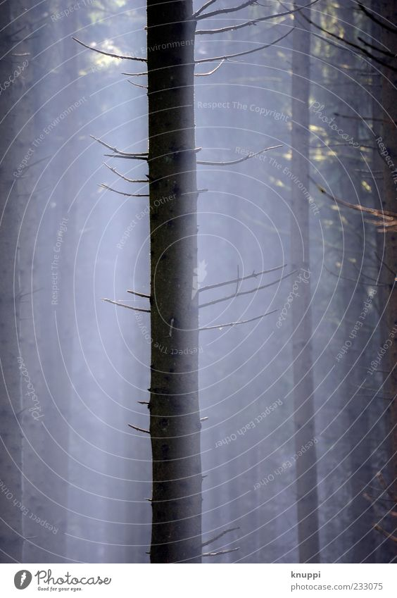 Nature Old Blue Tree Plant Black Calm Forest Environment Dark Wood Air Line Brown Fog Growth
