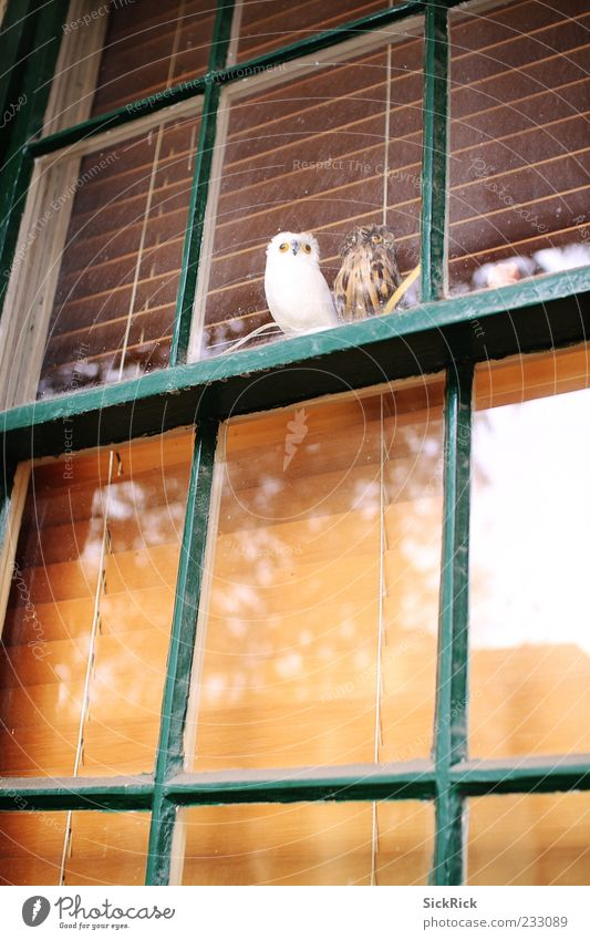 Owls Window Animal Owl birds 2 Calm Looking Reflection False Venetian blinds Colour photo Exterior shot Deserted Copy Space bottom Copy Space middle Day