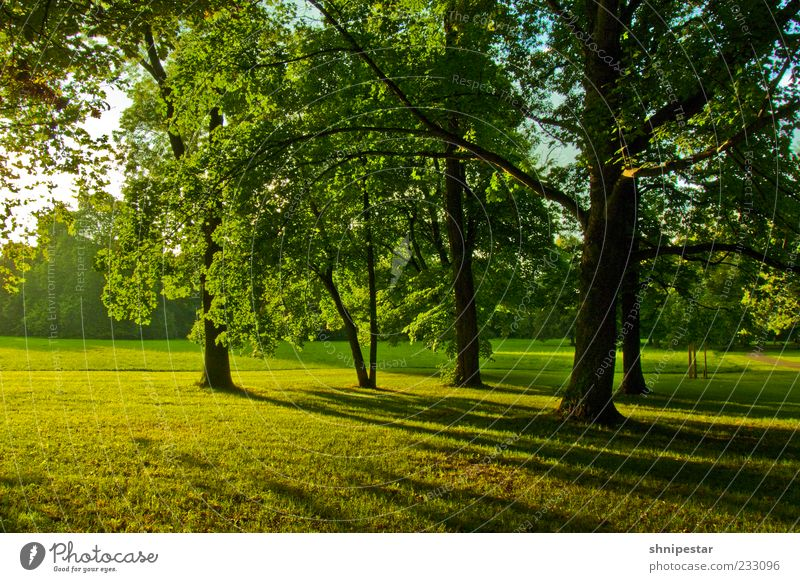Woodruff 2 Environment Nature Landscape Plant Elements Spring Summer Climate Weather Beautiful weather Tree Grass Park Meadow Forest Leipzig Clara Zetkin Park
