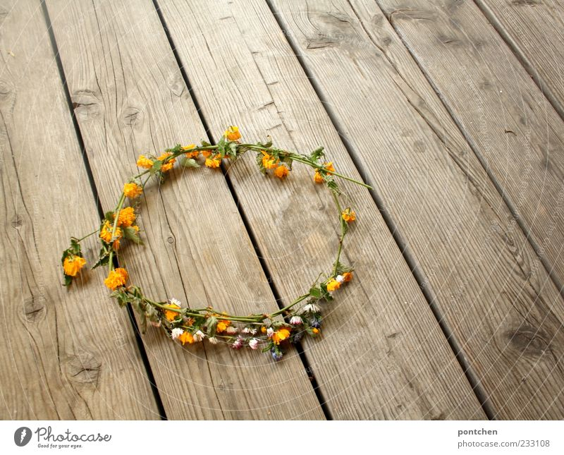 Nature White Green Plant Summer Flower Yellow Wood Spring Lie Esthetic Ground Kitsch Jewellery Daisy Tradition