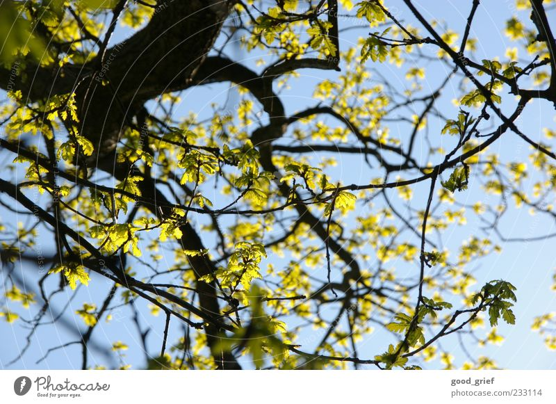 Sky Nature Blue Green Tree Plant Leaf Yellow Environment Climate Branch Beautiful weather Twig Blue sky Twigs and branches