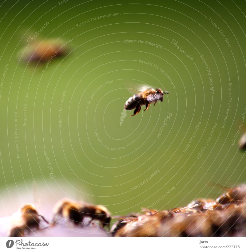 Nature Work and employment Flying Wild animal Bee Diligent Flock Group of animals Beehive Honey bee