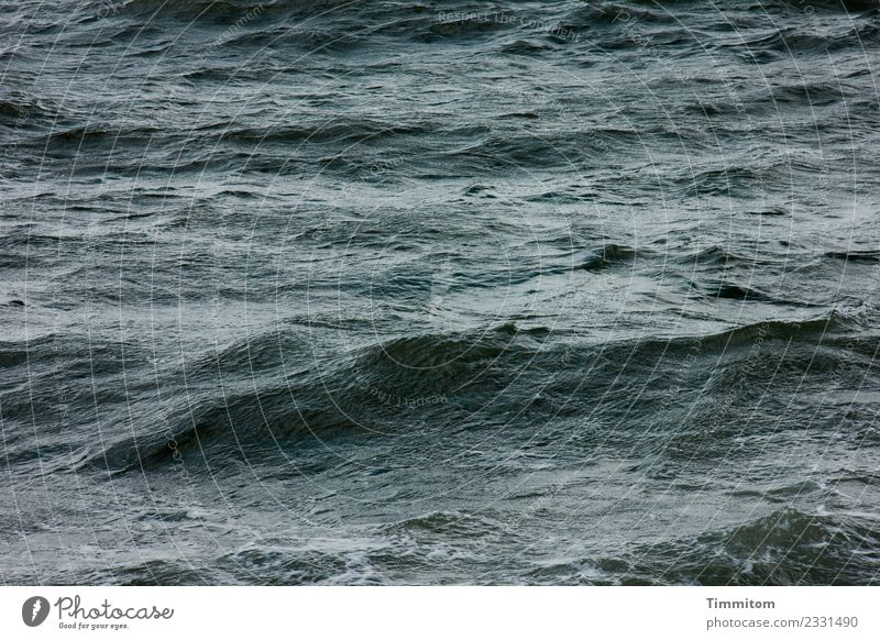 timeless | waves Environment Nature Elements Water Green Black Emotions North Sea Waves Swell Denmark Colour photo Exterior shot Deserted Day