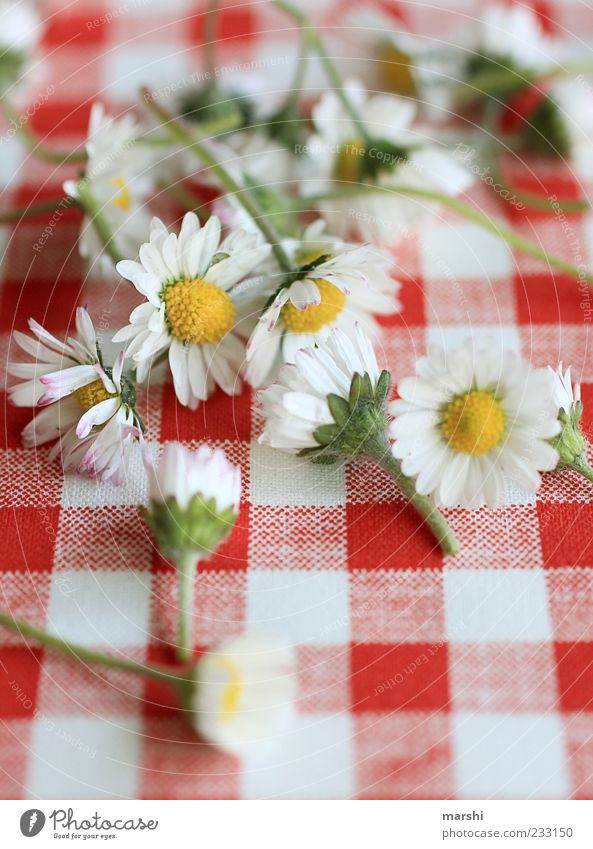 a portion he loves me, he doesn't love me Plant Flower Yellow Green Red White Checkered Daisy Beautiful Heap Blur Colour photo Interior shot Multiple Lie