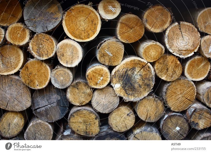 round Environment Nature Autumn Plant Tree Agricultural crop Wood Lie Sustainability Natural Round Brown Arrangement Stack Firewood Colour photo Exterior shot