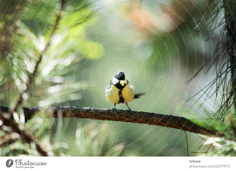 Tit Nature Blue Beautiful Colour Green White Tree Animal Winter Forest Yellow Environment Natural Small Garden Bird