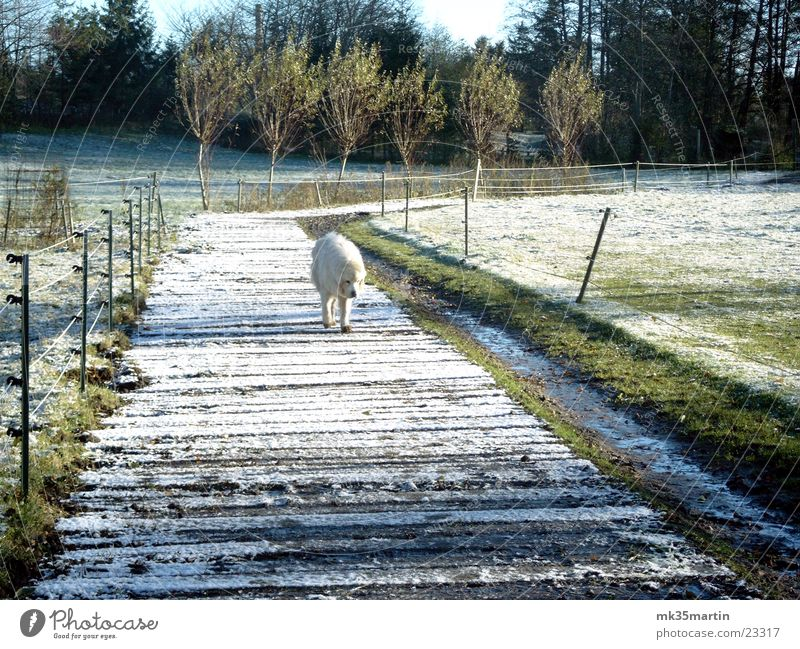 White Loneliness Animal Snow Dog Curiosity Discover Hide Earnest