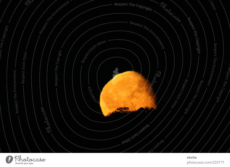 moonrise Nature Landscape Sky Night sky Moon Full  moon Tree Hill Deserted Sphere Bright Yellow Gold Black Moonlight Moonrise Colour photo Exterior shot