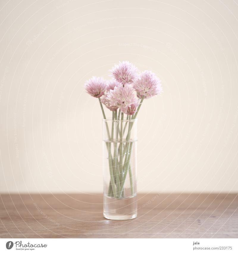 Beautiful Plant Flower Blossom Bright Glass Stalk Bouquet Blossom leave Minimalistic Spring fever Flower vase High-key