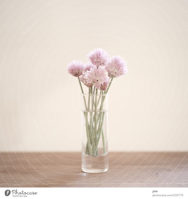 for the hungry romantic Plant Flower Blossom Bouquet Bright Beautiful Spring fever Colour photo Interior shot Deserted Copy Space left Copy Space right