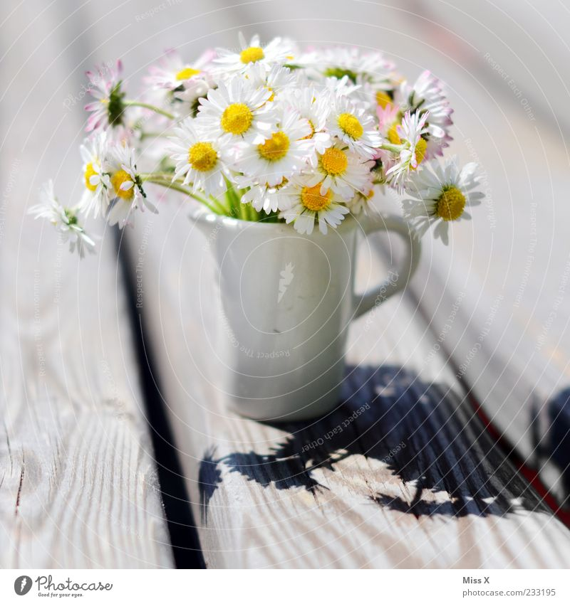 Little greeting Mother's Day Plant Sunlight Spring Summer Flower Blossom Blossoming Fragrance Beautiful Kitsch Daisy Vase Bouquet Flower vase Small Miniature