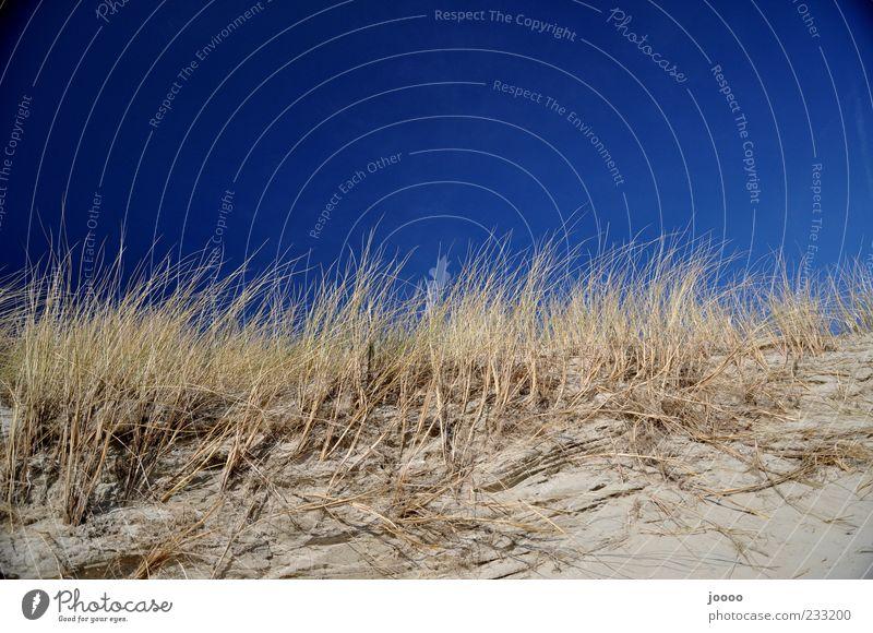 Sky Nature Blue Plant Beach Sand Coast Horizon Island Bushes Dune Blade of grass Cloudless sky Blue sky Marram grass