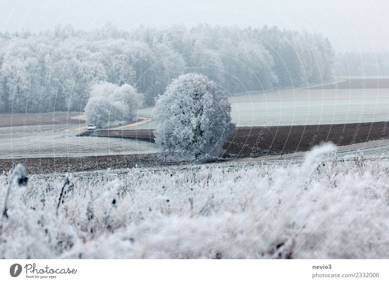 Winter landscape with bushes and snow-covered trees Environment Nature Landscape Plant Climate Climate change Weather Ice Frost Snow Snowfall Tree Bushes