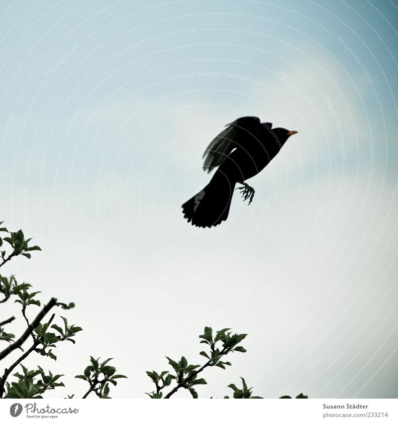 Sky Tree Leaf Movement Bird Flying Wild animal Aviation Wing Positive Departure Escape Beak Perspective Claw Twigs and branches