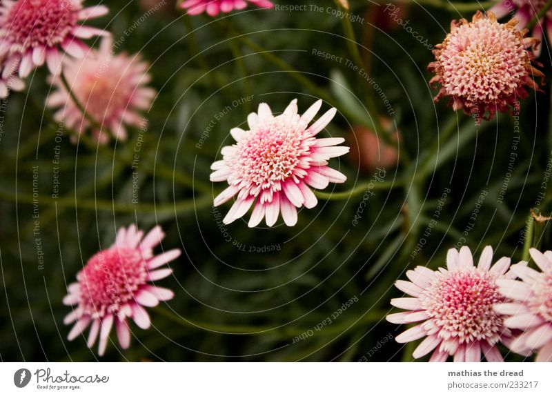 Nature White Beautiful Plant Summer Flower Leaf Environment Meadow Emotions Garden Blossom Happy Spring Park Pink