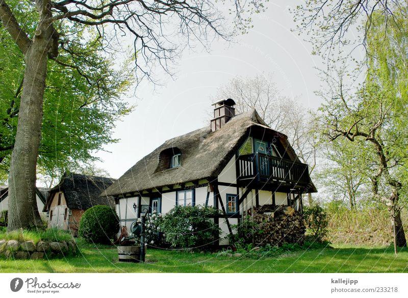 holsten bangs the hardest Lifestyle Luxury Elegant Style Living or residing Flat (apartment) House (Residential Structure) Dream house Garden Environment Nature