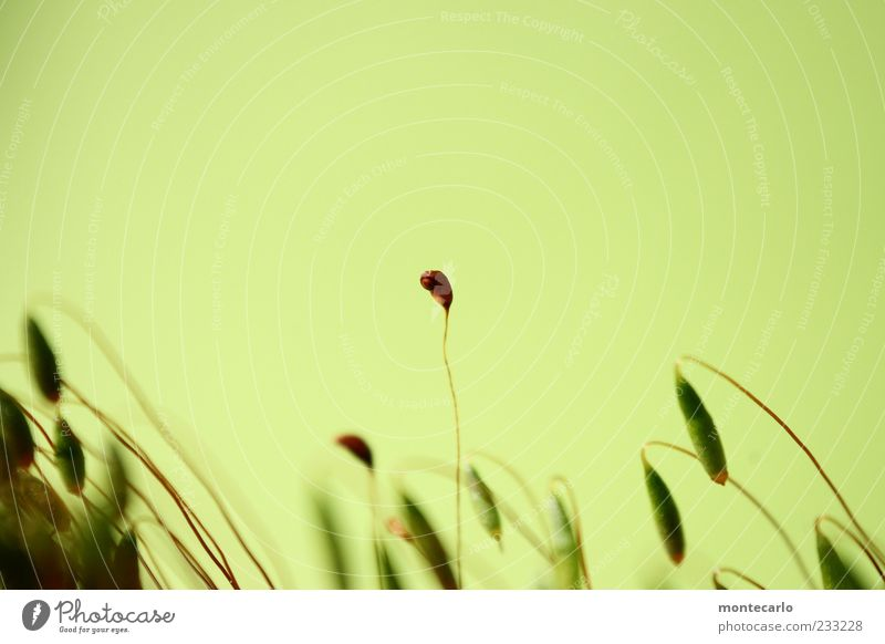 Nature Plant Blossom Thin Exceptional Moss Exotic Part of the plant Bright green