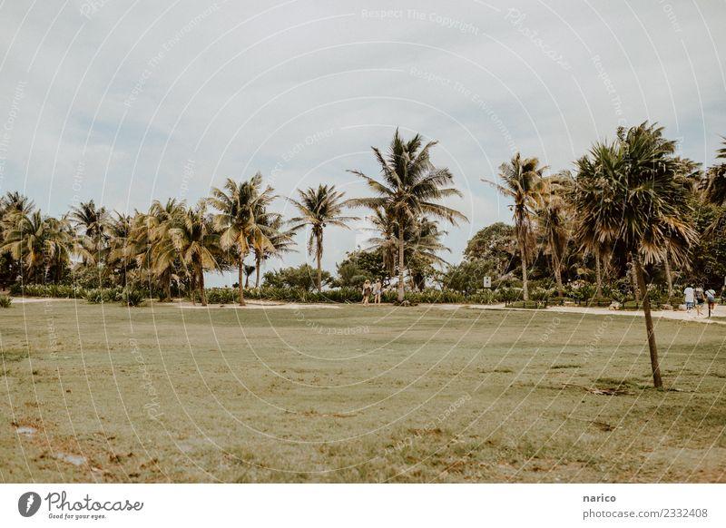 Nature Plant Summer Landscape Tree Environment Grass Park Mexico Tulum