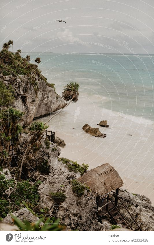 Mexico III Environment Nature Landscape Rock Waves Beach Bay Ocean Animal Bird Stone Sand Wood Observe Discover Flying Idyll Tulum Colour photo Subdued colour