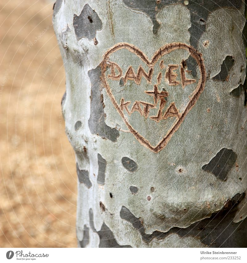 William and Kate? Couple Plant Tree American Sycamore Tree trunk Park Places Sign Characters Heart Write Growth Together Natural Emotions Happy Spring fever