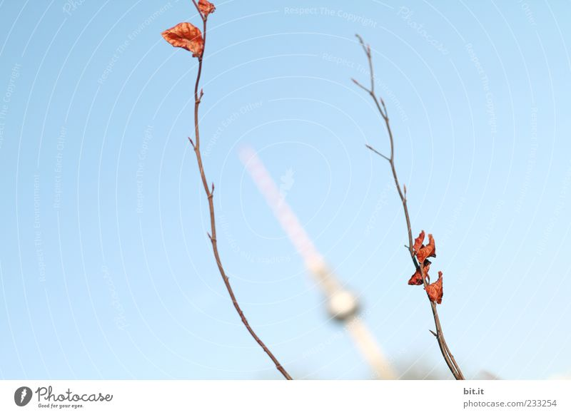 Blue Summer Leaf Far-off places Autumn Berlin Small Spring Perspective Change Tower Historic Landmark Twig Autumn leaves Silver