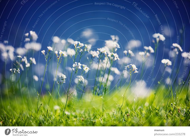 lawn blossom Nature Spring Plant Flower Grass Wild plant Spring flower Meadow Blossoming Fragrance Spring fever Colour photo Exterior shot Deserted
