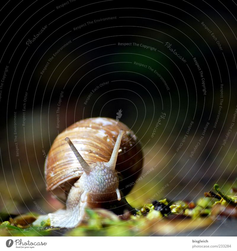 snail I Snail Snail shell 1 Animal Small Slowly Calm Slimy Feeler Colour photo Exterior shot Close-up Copy Space top Shallow depth of field Deserted Blur Brown