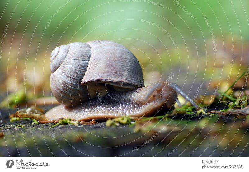 Green Animal Gray Movement Small Snail Feeler Slowly Slimy Snail shell