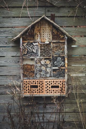 Insect hotel hangs on wooden wall Environment Nature Winter Living or residing Winter activities Hotel Stone Wood Nest Nest-building Survive
