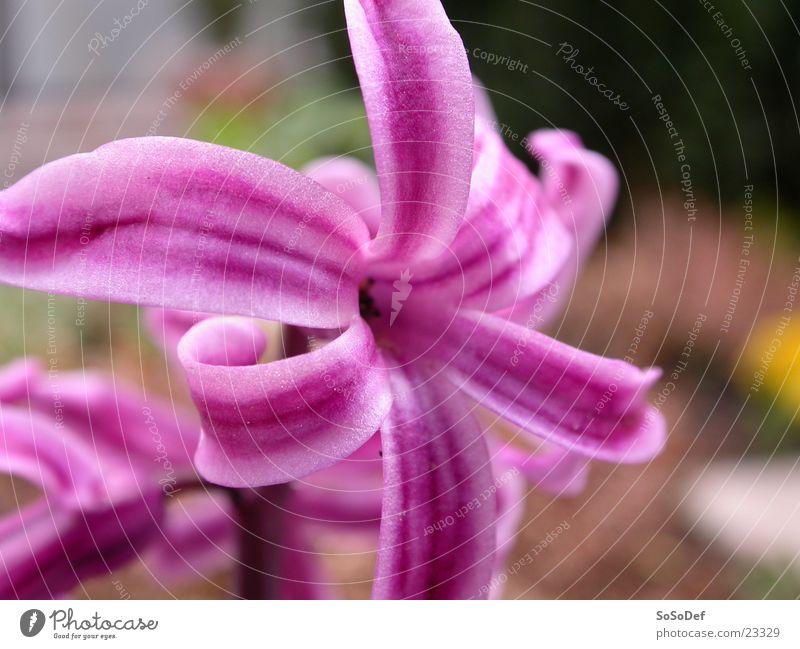 Pink flower Flower