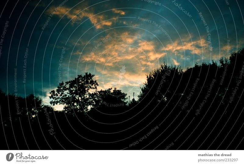evening mood Environment Nature Landscape Sky Clouds Summer Beautiful weather Tree Forest Esthetic Exceptional Dark Contrast Colour photo Multicoloured