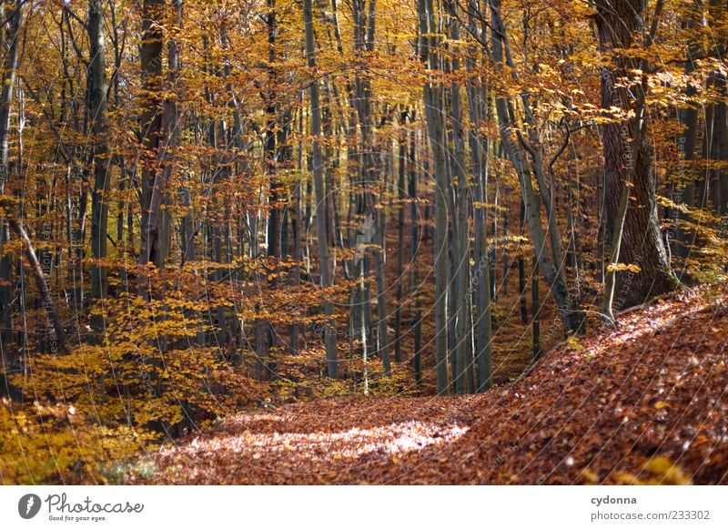 autumn forest Well-being Contentment Relaxation Calm Trip Freedom Environment Nature Landscape Autumn Tree Forest Loneliness Uniqueness Beautiful Transience