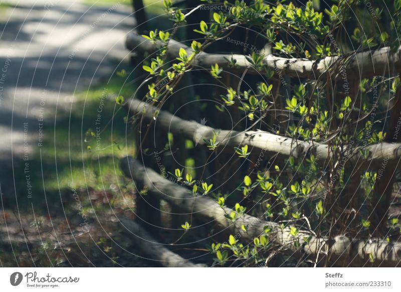 spring Garden Garden fence Wooden fence Country life Nature Sunlight Spring Beautiful weather Plant Bushes Leaf Twig Leaf bud Fence Barrier Boundary