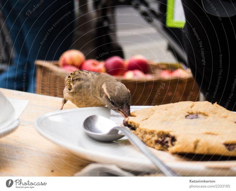 sparrow - little thief Food Cake Dessert Candy Chocolate Eating Breakfast Vegetarian diet Spoon Joy Gastronomy Town Downtown Street Animal Bird Wing 1 Diet