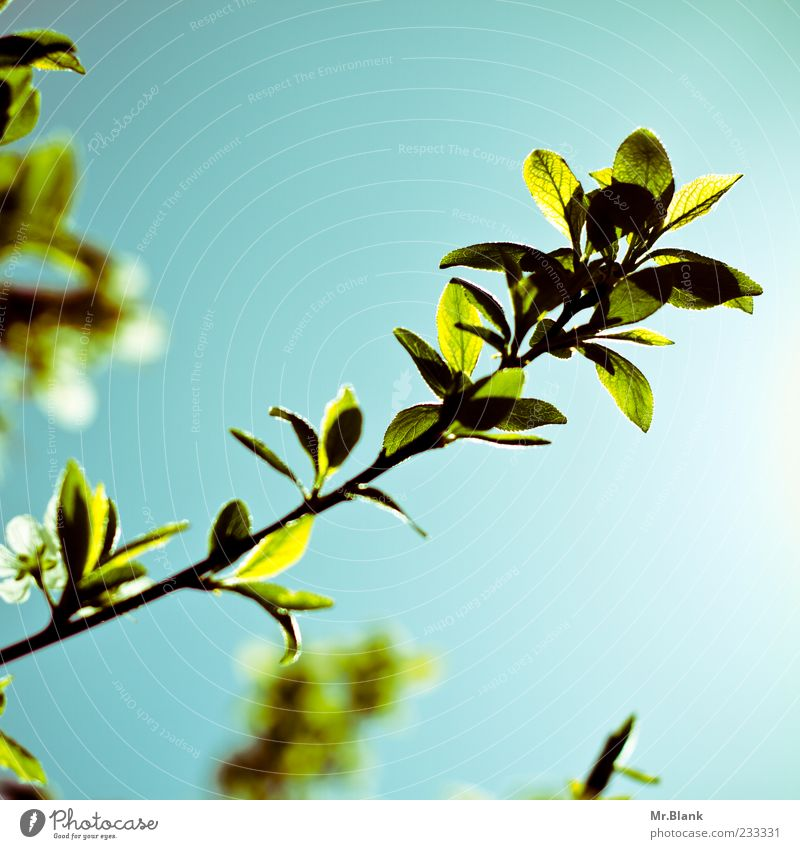 Nature Blue Green Beautiful Tree Plant Leaf Spring Bright Branch Beautiful weather