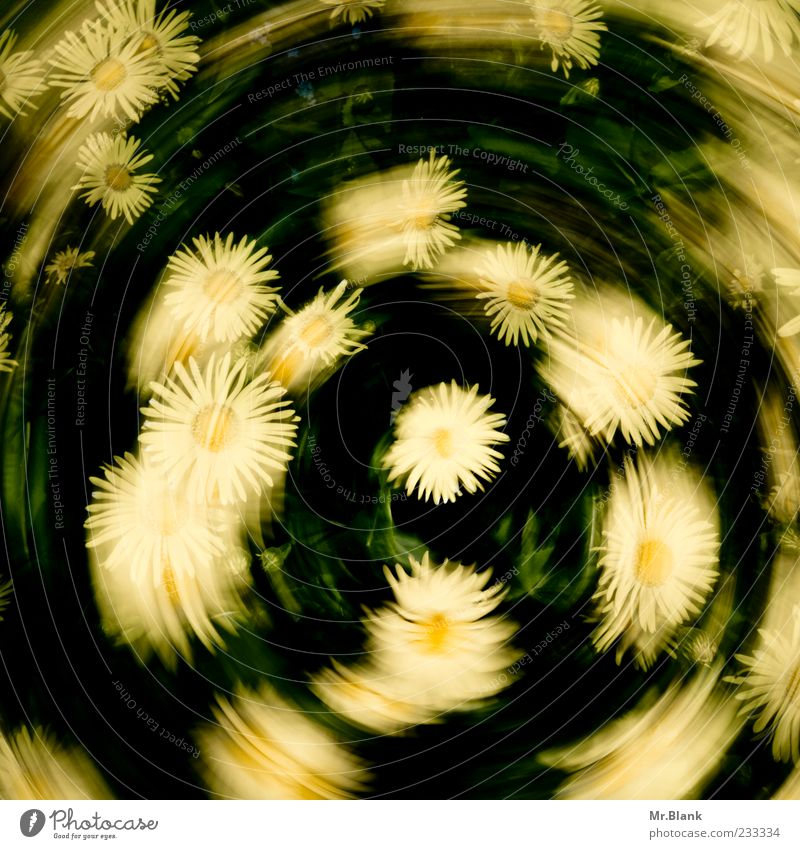flower wreath with a difference Nature Plant Spring Flower Blossom Yellow Green Swirl Rotate Life Blur Movement Colour photo Exterior shot Deserted Day